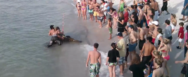 Monster Grouper Caught On A Crowded Beach In Naples, FL